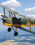 tigermoth 299500825
